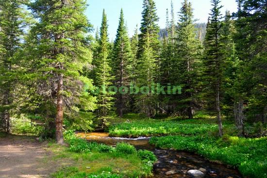 Фотообои Горная речка в лесу