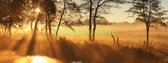 Фотообои Панорама деревья на закате