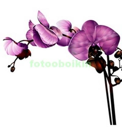 3D ветка орхидеи