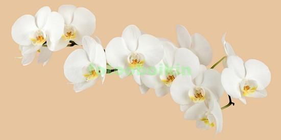 3D белая орхидея