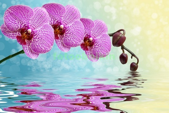 3D розовая орхидея