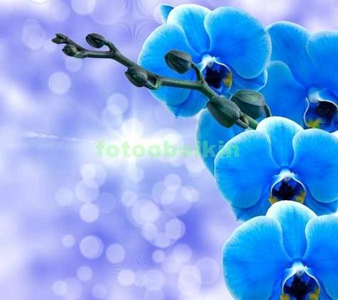 Фотообои 3D синяя орхидея