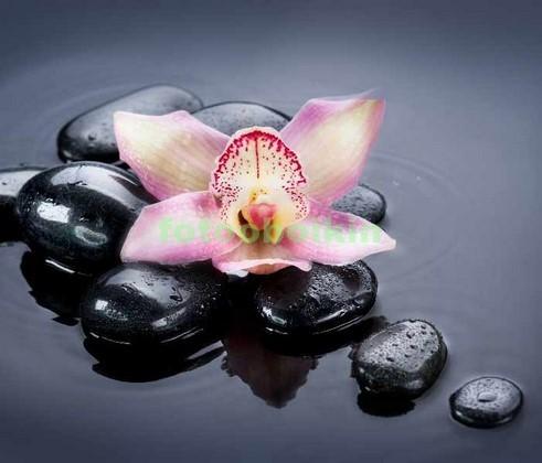 3D орхидея на камнях