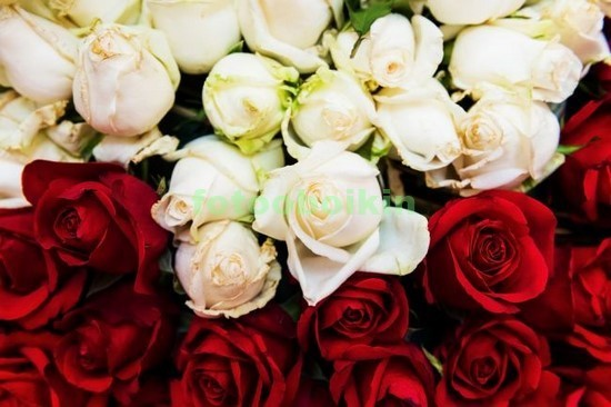 Фотообои Белые розы с красными