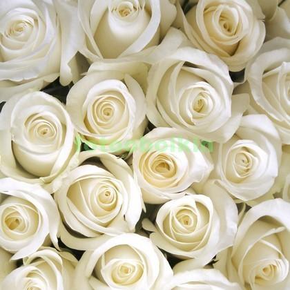 Много белых роз