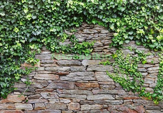 Кирпичная стена с ветками