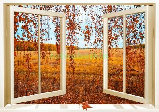 Окно с видом на осеннюю березу