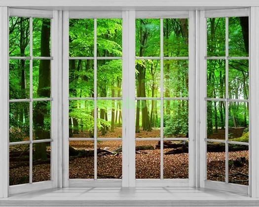Окно с видом на зеленый лес