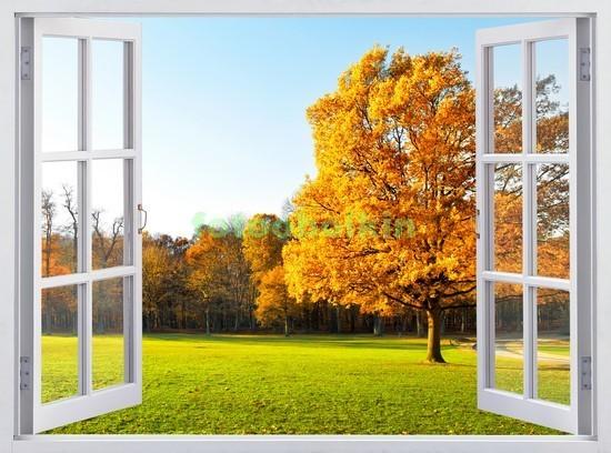 Окно с видом на парк и дерево