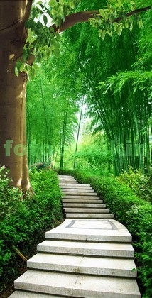 Сад с бамбуковыми зарослями