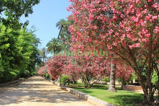 Фотообои Сад с розовыми деревьями