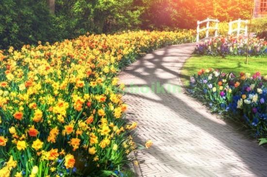Сад с тюльпанами