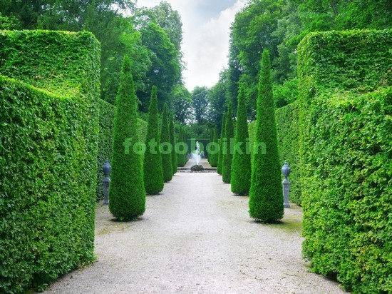 Фотообои Сад из кустов