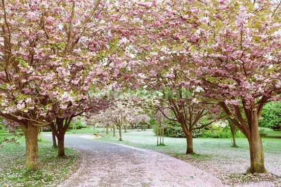 Цветущие деревья в саду