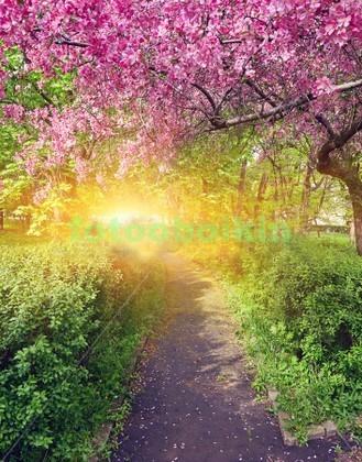 Дерево сакуры в саду