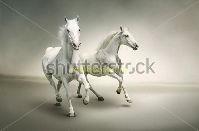 Лошади на сером фоне
