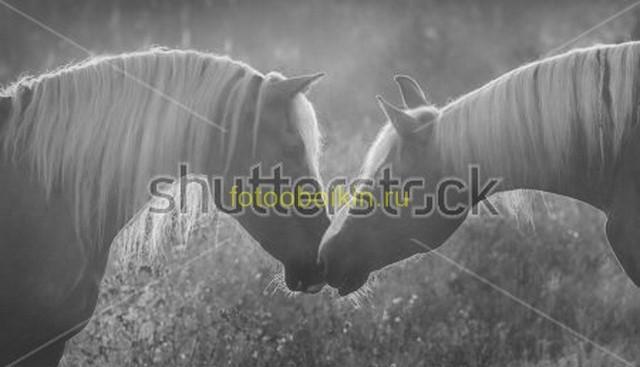 Две лошади на сером фоне