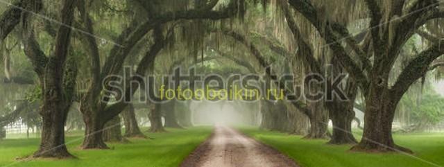 Дорога в саду