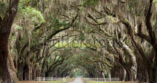 Деревья и дорога