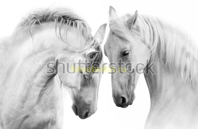 Лошади на белом фоне