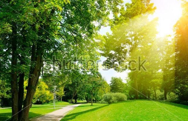 Солнце в саду