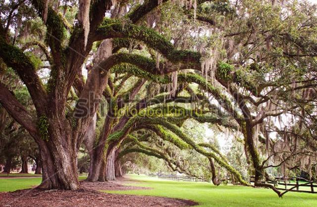 Деревья извилистые