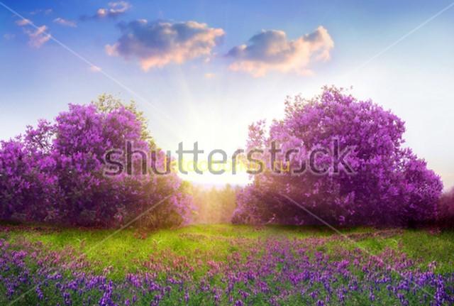 Сереневые деревья и облака