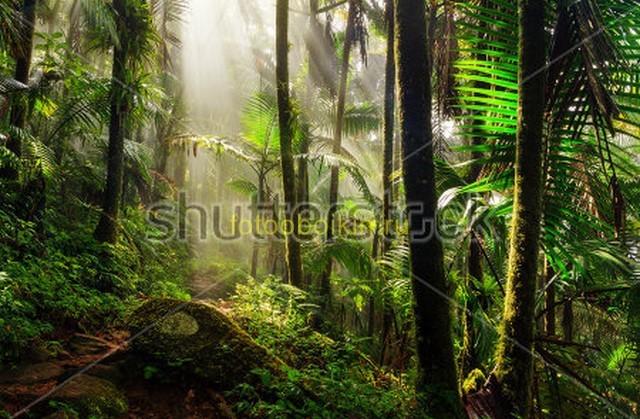 Освещенные джунгли