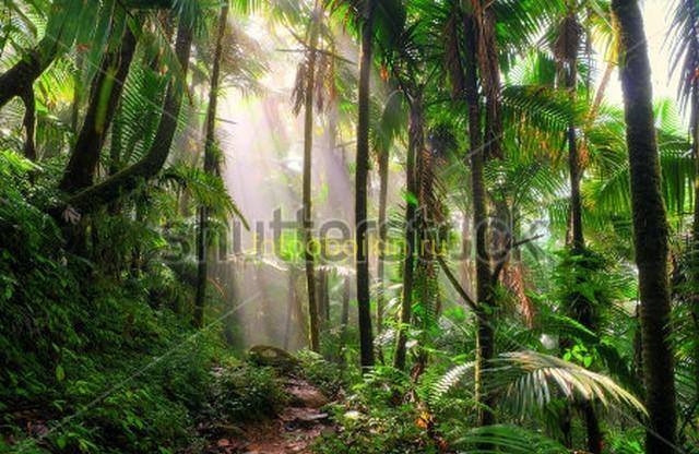 Солнечные лучи в зеленом лесу