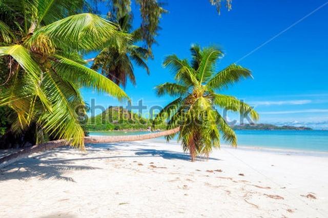 Пальмы и белый песок