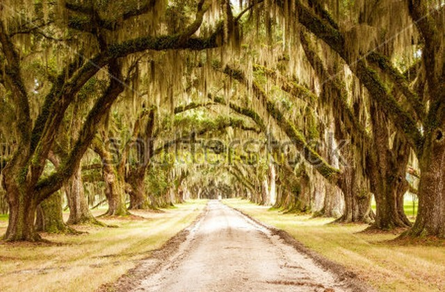 Деревья улица