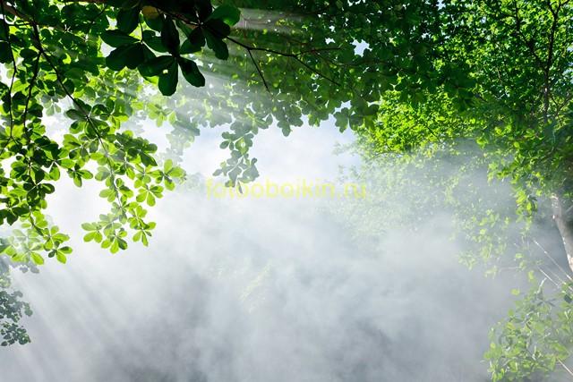 Туман и солнечный дым