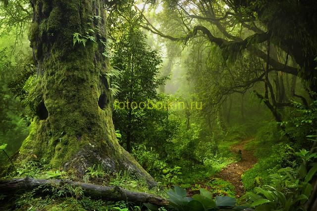 В зеленом лесу