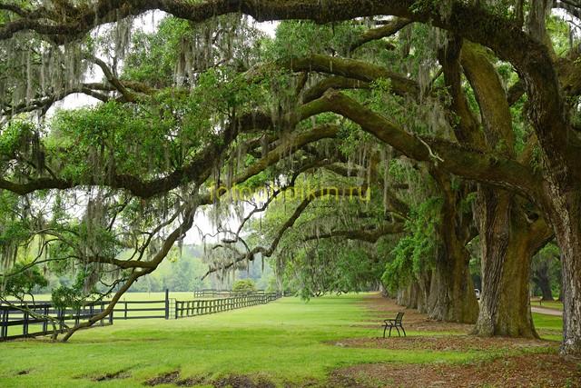 Деревья зеленые