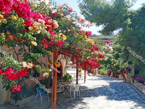 Оранжево-розовые цветы на улице