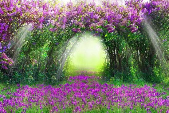 Сад из фиолетовых цветов