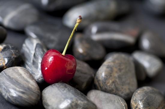 Вишня на камнях