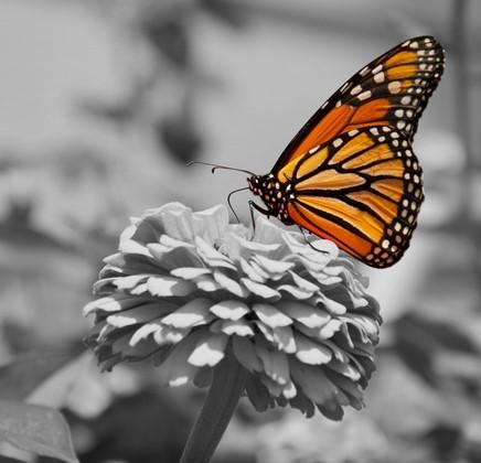Одуванчик и бабочка