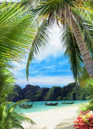 Пальма на острове в Тайланде