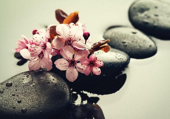 Орхидея бело-розовая на камнях