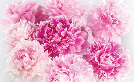Цветы розово-оранжевые