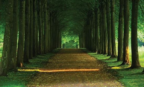 Зеленая дорога в лесу