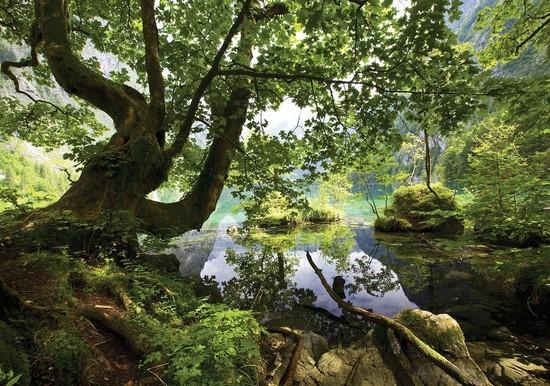 Озеро в зеленом лесу
