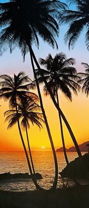 Пальмы с закатом