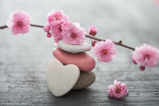Нежно-розовые цветы на коамнях