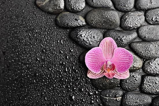 Орхидея в воде с камнями