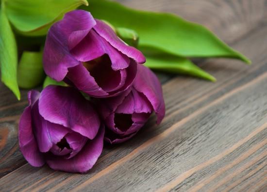 Тюльпаны фиолетовые на столе