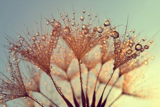 Роса на цветке