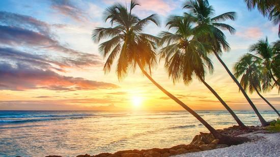 Пальмы с видом на небо и облака