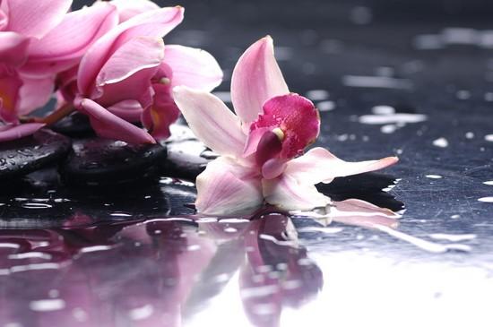 Орхидея розовая на воде